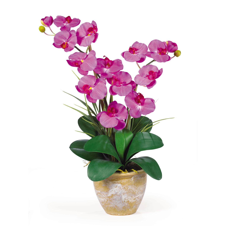 Add to cart double stem phalaenopsis silk flower arrangement izmirmasajfo